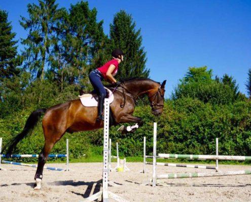 Reiten-Strolch-mit-Toni-über Sprung